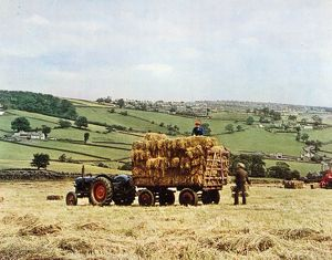 Haymaking in the Mayfield Valley